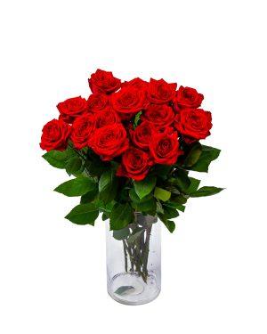 Punane roos keskmine