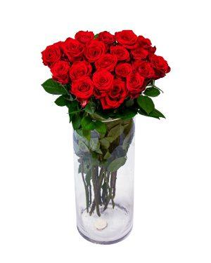 Punane roos pikk